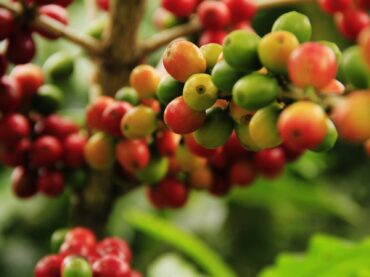 How is Coffee Made?