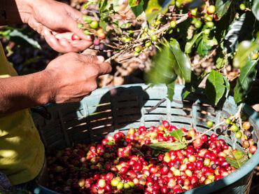 What is Sustainable Coffee?